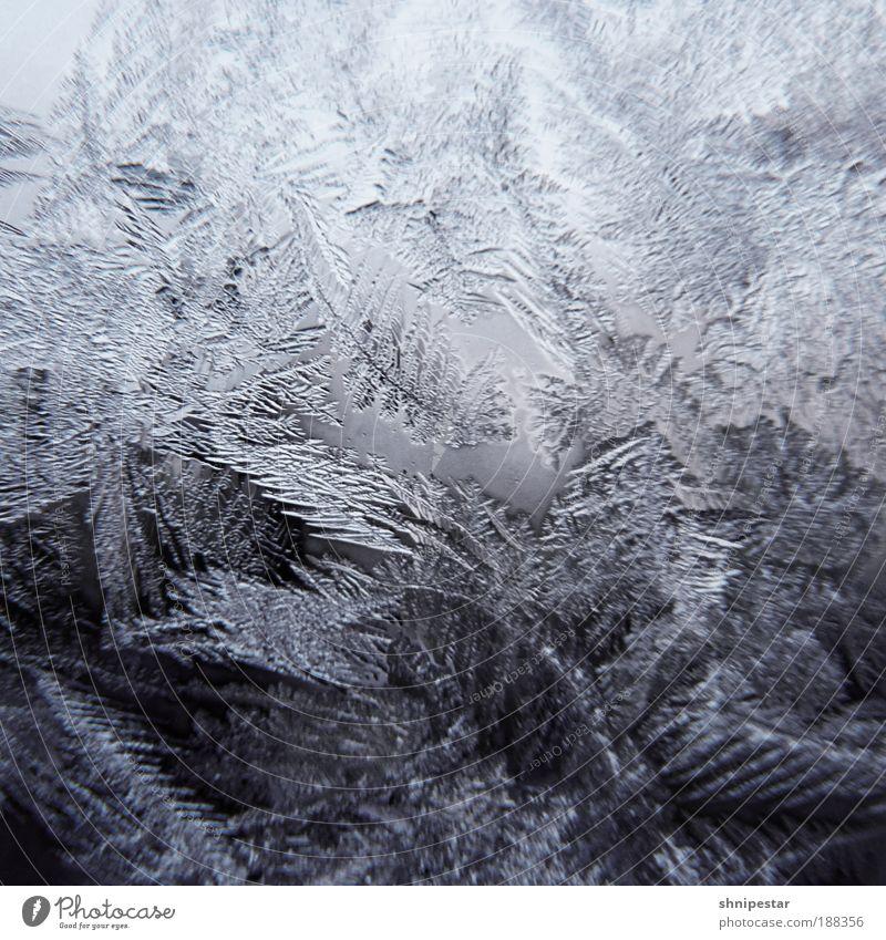 Arschkalt in Berlin Natur Wasser weiß blau Winter ruhig Schnee Fenster grau Schneefall Eis Raum Zusammensein Kontrast Coolness