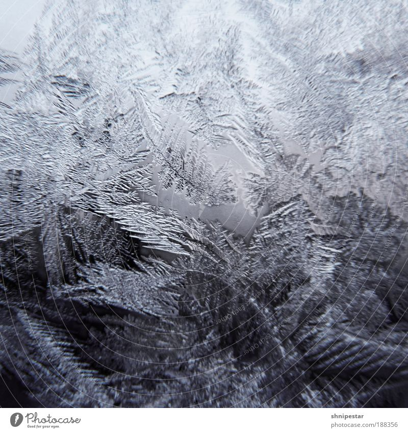 Arschkalt in Berlin Natur Wasser weiß blau Winter ruhig kalt Schnee Fenster grau Schneefall Eis Raum Zusammensein Kontrast Coolness