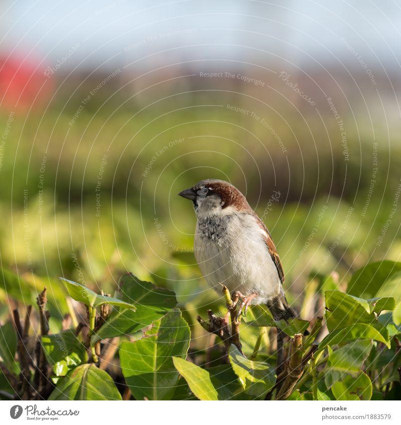 spatz in der hand... Natur Himmel Schönes Wetter Sträucher Tier Wildtier Vogel 1 Blick Spatz Unschärfe freilebend rot grün Grünpflanze Farbfoto Außenaufnahme