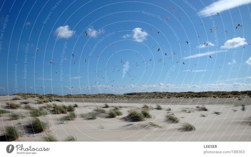 Meetingpoint. Umwelt Natur Landschaft Sand Luft Himmel Wolken Sommer Klima Schönes Wetter Wind Pflanze Gras Sträucher Küste Strand Nordsee Ostsee Meer