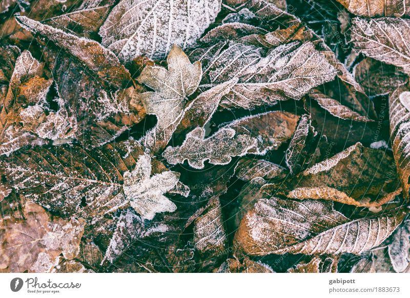 Winteranfang Umwelt Natur Landschaft Herbst Wetter Schönes Wetter schlechtes Wetter Eis Frost Blatt Garten Park frisch kalt braun mehrfarbig Lebensfreude Idylle