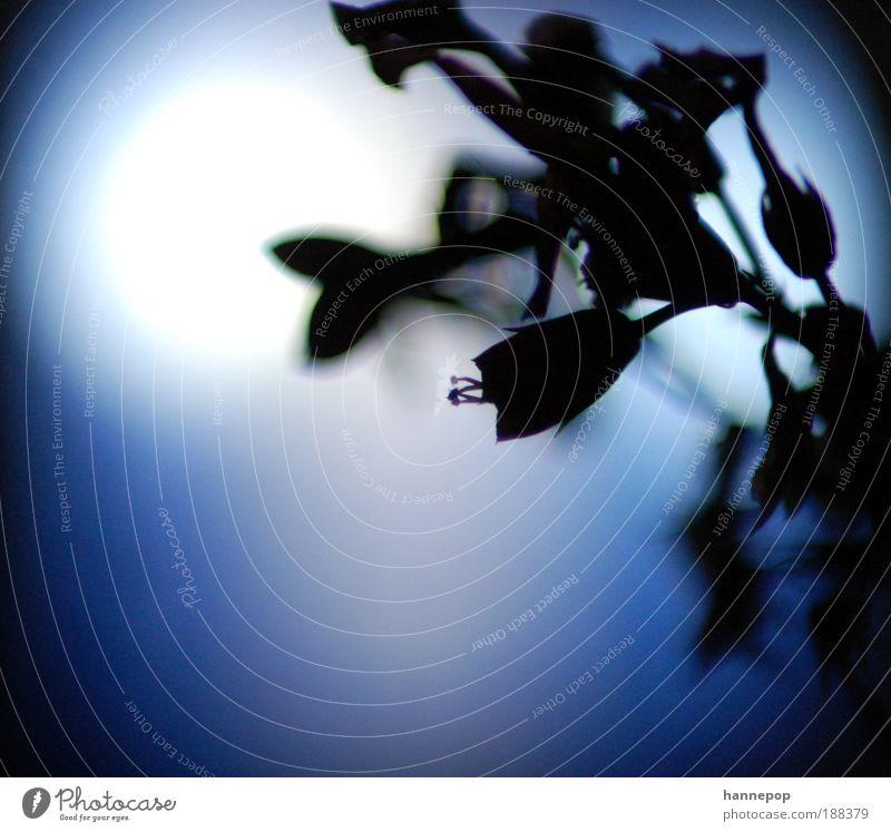 staub Natur blau Pflanze ruhig Einsamkeit kalt Blüte Perspektive Wachstum Duft Kontrast verblüht Staubfäden