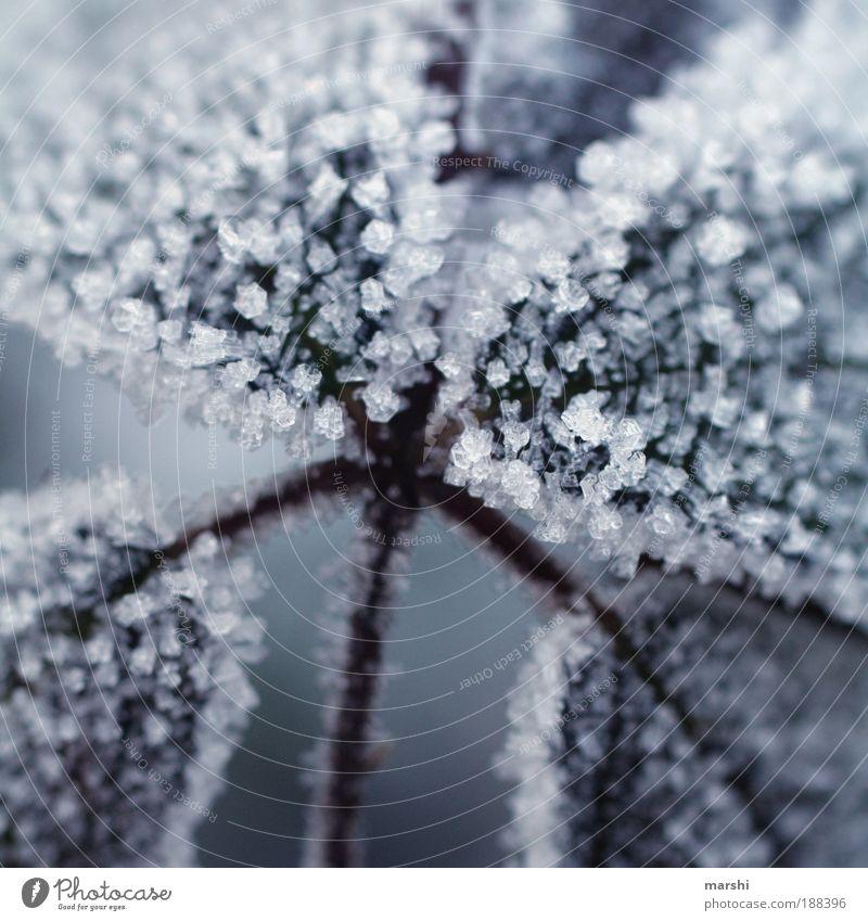 Zucker Winter Wetter Pflanze Blatt kalt Kristalle Eis Frost Nahaufnahme Eiskristall süß Unschärfe Farbfoto Außenaufnahme