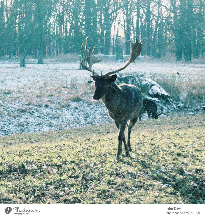 Jägermeister Natur Baum Winter Tier Wald Gras Bewegung Park elegant Sträucher Spaziergang Idylle Farbe Wildtier Jagd Pflanze