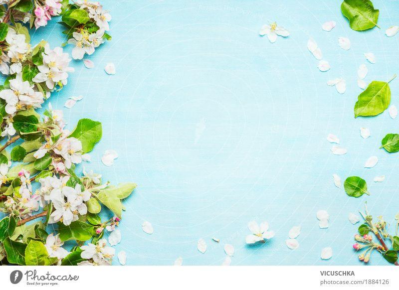 Frühlingsblüher auf blau türkis Hintergrund Design Duft Garten Natur Pflanze Sommer Baum Blume Sträucher Blatt Grünpflanze Blühend rosa Stimmung rein Stil April
