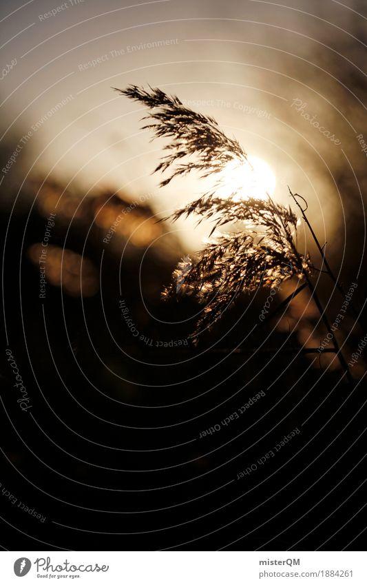 Sonnenwind. Erholung ruhig Gras Kunst Idylle ästhetisch Wind Wellness Seeufer Windstille wehen friedlich