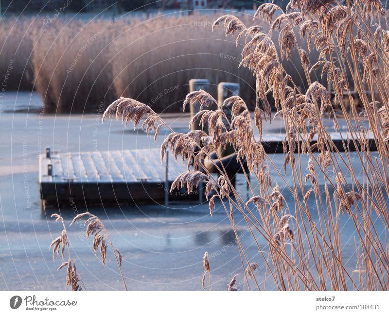 Froststeg ruhig See Eis Schilfrohr Steg Seeufer Anlegestelle stagnierend erstarren