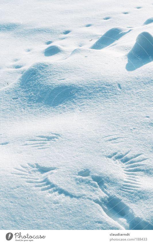 Engel Natur Weihnachten & Advent schön weiß Winter kalt Schnee Tod Glück Eis Kraft Kunst Wetter elegant fliegen Hoffnung