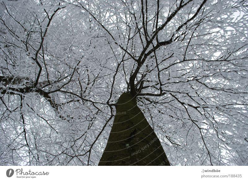 Verzaubert Natur Wasser schön Himmel weiß Baum Winter ruhig schwarz Wald Leben kalt Schnee Erholung Berge u. Gebirge Landschaft