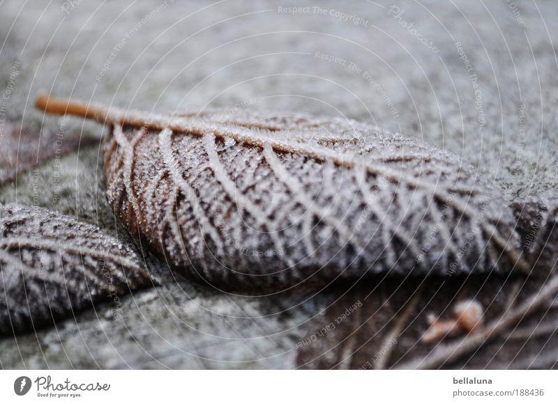 eisige Adern Umwelt Natur Pflanze Winter Wetter Schönes Wetter Eis Frost Schnee kalt Blatt Blattadern Farbfoto Nahaufnahme Morgen Tag Licht Schatten