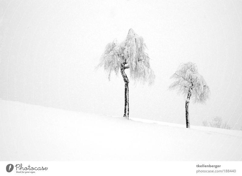Wintertraum in weiss Natur Landschaft Pflanze Wasser Wolken Eis Frost Schnee Baum Birke Hügel dunkel frisch grau schwarz weiß Stimmung Einigkeit Einsamkeit