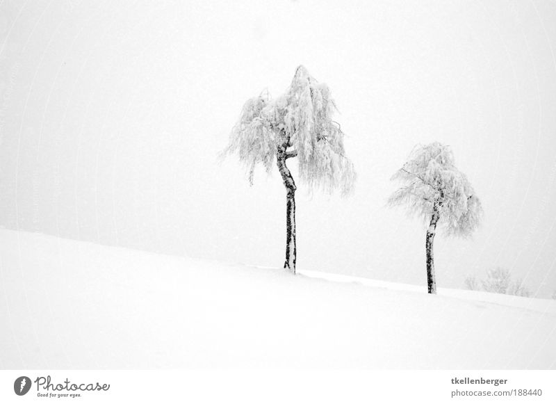 Wintertraum in weiss Natur Wasser weiß Baum Pflanze Wolken schwarz Einsamkeit Ferne kalt dunkel Schnee Umwelt Landschaft grau