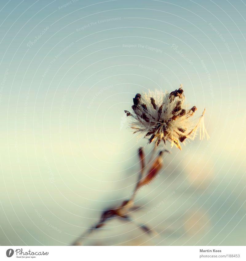 winter.wind.still.blüten.blues Natur schön Blume Pflanze kalt Stil Blüte träumen Wärme Stimmung Kraft Wind Hoffnung ästhetisch Wachstum authentisch