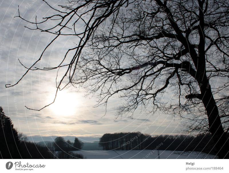 *400* Winterstimmung Natur schön Himmel weiß Baum Sonne blau Pflanze schwarz Wolken Wald kalt Schnee Erholung Landschaft