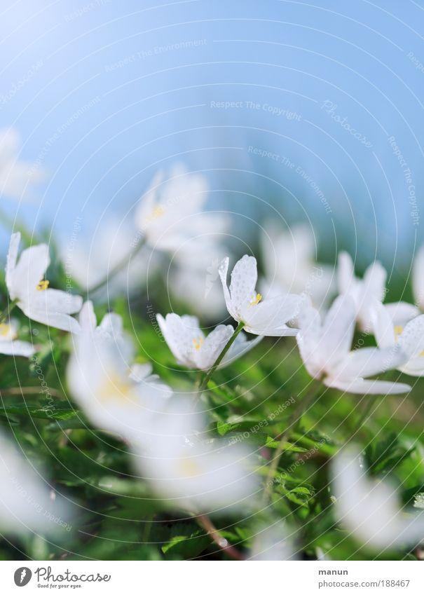 Wiesengrund Natur Pflanze Blatt Leben Frühling Blüte Feste & Feiern hell Park frisch Fröhlichkeit Blühend Schönes Wetter Blume Duft