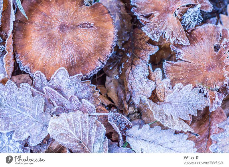 Frostlaub Umwelt Natur Landschaft Pflanze Tier Herbst Winter Klima Wetter Eis Blatt Pilz Wald Waldboden Menschenleer außergewöhnlich frisch hell natürlich schön