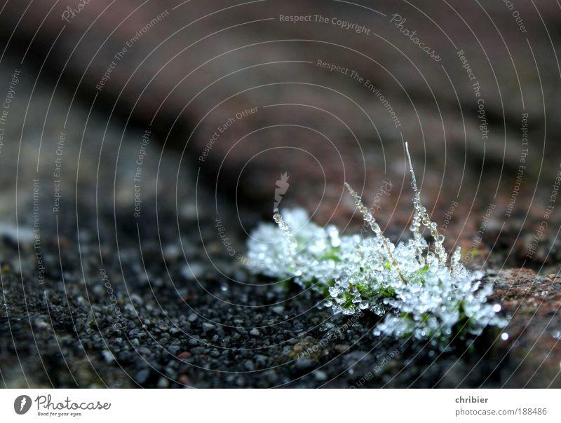 Aufgefädelt Winter ruhig kalt Eis glänzend Wassertropfen Trauer Frost Ende Klima Vergänglichkeit Spitze zart frieren Moos bewegungslos