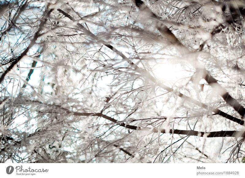 cold hours Natur Sonne Tier Freude Winter Wald Gefühle Glück Stimmung Zufriedenheit Eis Wassertropfen Frost