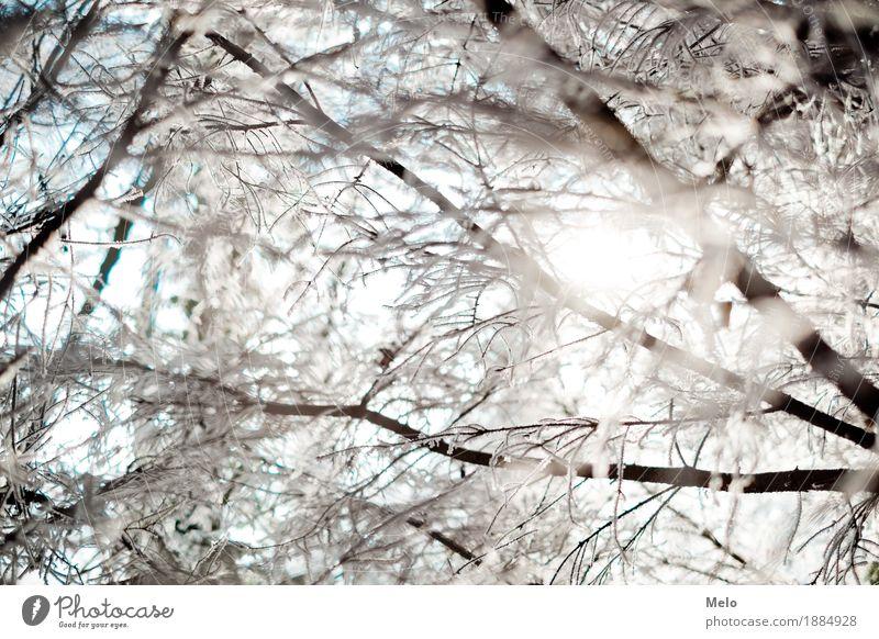 cold hours Natur Tier Wassertropfen Sonne Sonnenlicht Winter Eis Frost Wald Gefühle Stimmung Freude Glück Zufriedenheit Farbfoto Außenaufnahme Menschenleer