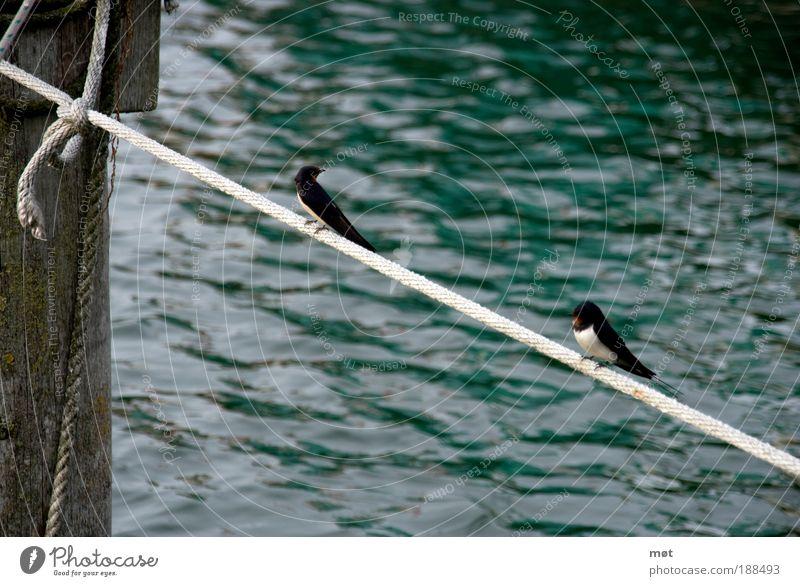 Seiltänzer Natur Tier Wasser Sommer Küste Bucht Ostsee Insel Vogel Flügel 2 Tierpaar hocken seilhüpfen sitzen Farbfoto Außenaufnahme Menschenleer Tag