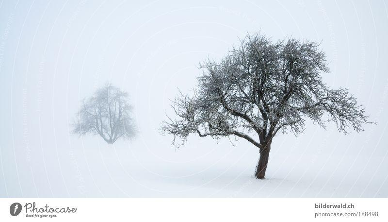 Zwei Bäume im Schnee harmonisch Erholung ruhig Winter Winterurlaub Natur Landschaft Nebel Baum Wiese weiß Schneelandschaft Schneedecke Farbfoto Außenaufnahme