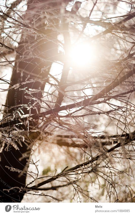 frosty morning Natur schön Sonne Baum Tier Winter Wald gelb Glück Stimmung orange Luft gold stark positiv