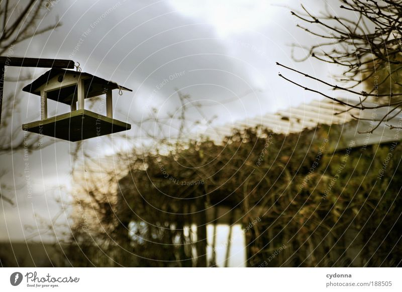 Gespenstische Stille Umwelt Natur Herbst Winter Garten Einsamkeit bedrohlich geheimnisvoll Hoffnung Leben ruhig stagnierend Tod Traurigkeit Verfall