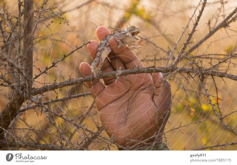 Camelion Hand Umwelt Natur Landschaft Frühling Sommer Herbst Schönes Wetter Wärme Dürre Pflanze Baum Sträucher Wildpflanze Wüste Tier Wildtier Tiergesicht