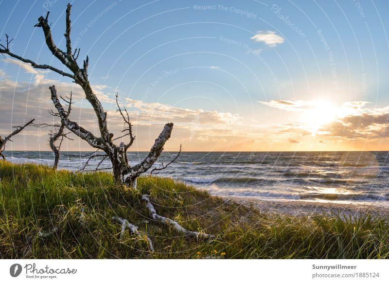 Sonnenuntergang an der Ostsee Umwelt Natur Landschaft Pflanze Wasser Sonnenlicht Sommer Wind Wellen Küste Strand Meer beobachten Liebe Ferien & Urlaub & Reisen
