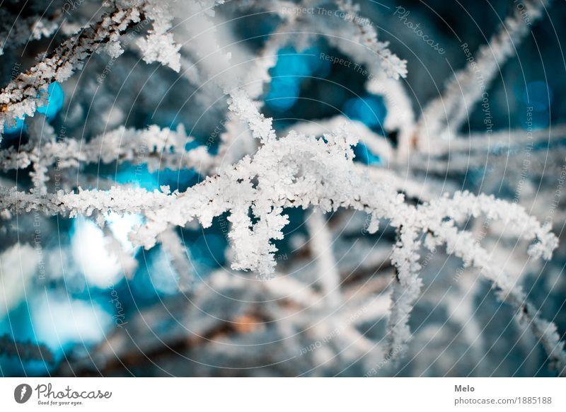 Frost Natur Pflanze blau Wasser Einsamkeit Tier Winter Wald kalt Luft frisch Wassertropfen türkis Grünpflanze
