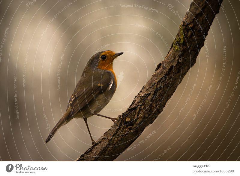 Rotkehlchen Natur grün weiß Baum Einsamkeit Tier Winter Wald Umwelt Leben Herbst natürlich Garten braun Vogel orange