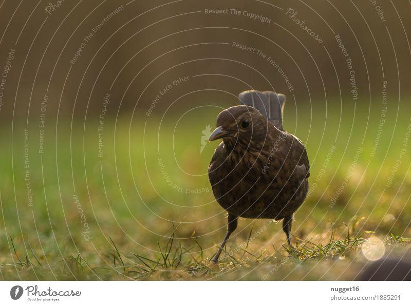Amsel Natur grün Tier schwarz Umwelt Frühling Herbst Wiese Gras Garten braun Vogel orange Park Eis Wildtier