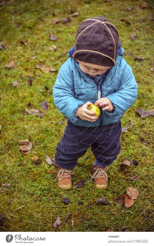 apfel Frucht Apfel Mensch Kind Kleinkind Junge Familie & Verwandtschaft Kindheit 1 Herbst blau Mütze entdecken Essen Gesunde Ernährung Gesundheit stehen klein