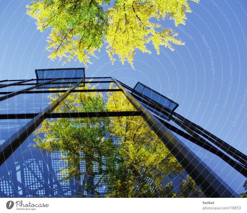 phase2 Reflexion & Spiegelung Baum planen Architektur Glas Himmel Erscheinung