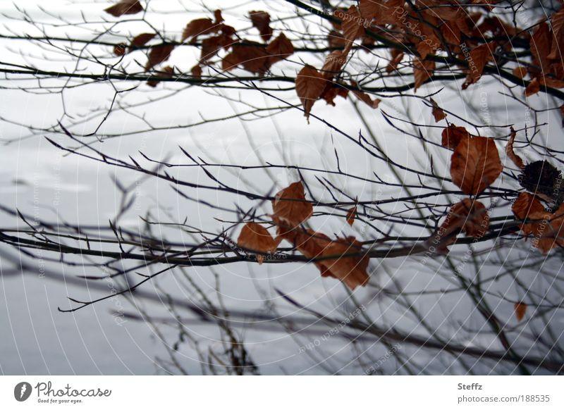 Winter am See Natur Pflanze ruhig Blatt kalt Umwelt Schnee grau braun Stimmung Eis Sträucher Klima Ast