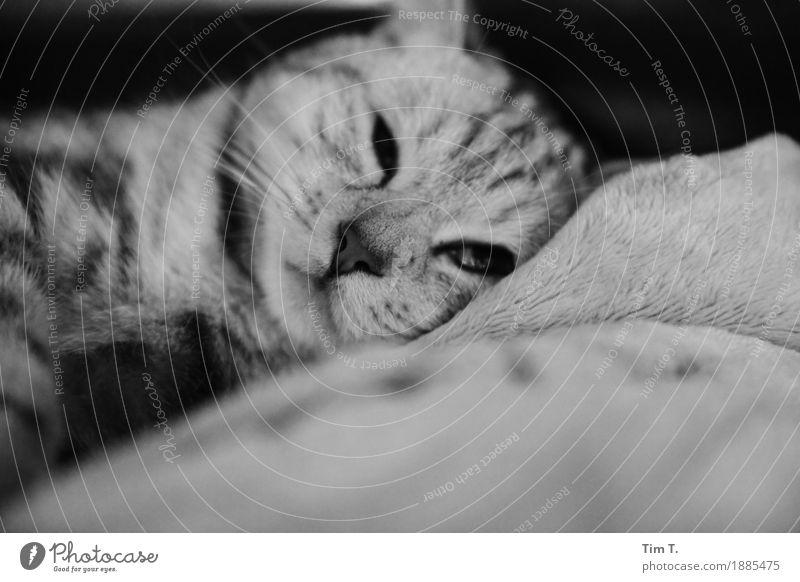Katze Tier Haustier 1 Tierjunges Schutz stagnierend Erholung Schwarzweißfoto Innenaufnahme Menschenleer Morgen Unschärfe Blick