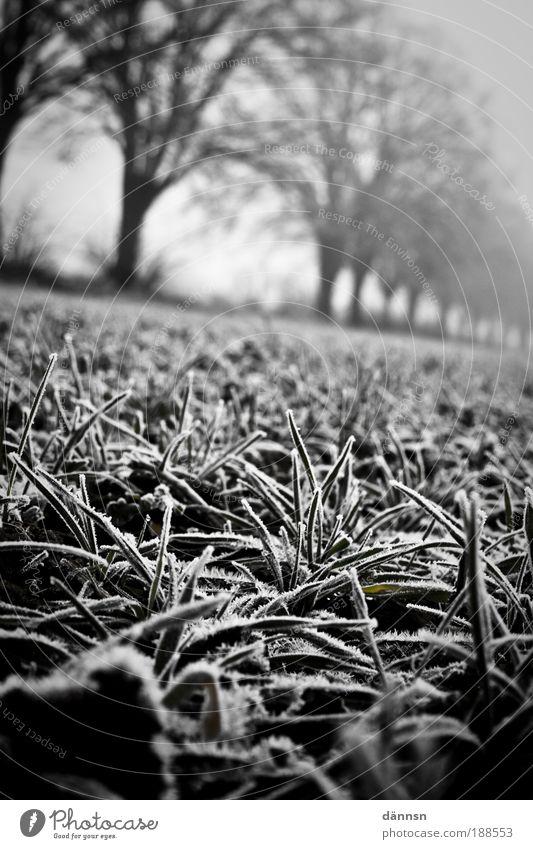 Nebel am Morgen II Natur Menschenleer Angst bizarr Gefühle kalt Wald Eis Frost Wege & Pfade Winter Erde Feld Licht Schatten Schwarzweißfoto Außenaufnahme