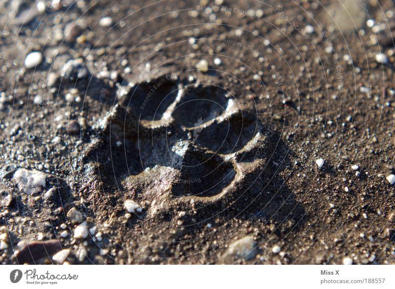 Katze oder Hund ??? Natur Erde Tier Haustier Wildtier Pfote Fährte 1 laufen dreckig Gassi gehen Spaziergang Stein Wege & Pfade Abdruck bedrohlich Jagd Farbfoto