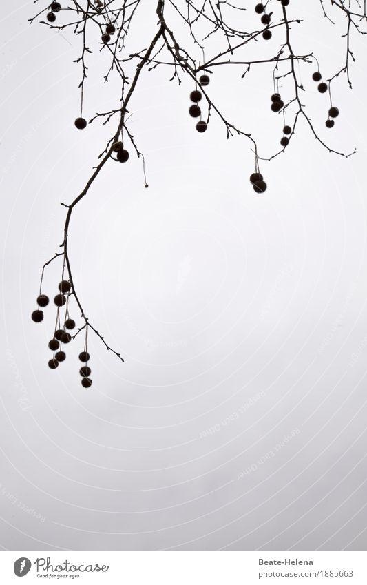 Baumschmuck Natur Pflanze Himmel Winter Wetter Eis Frost Park atmen frieren sparen warten ästhetisch grau Tapferkeit diszipliniert Ordnungsliebe zurückhalten