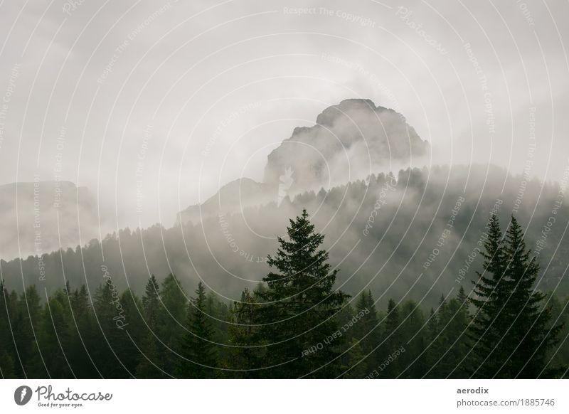 Berggipfel im Nebel mit Tannen im Vordergrund Himmel Natur Ferien & Urlaub & Reisen grün Baum Landschaft Wolken Wald Berge u. Gebirge Reisefotografie
