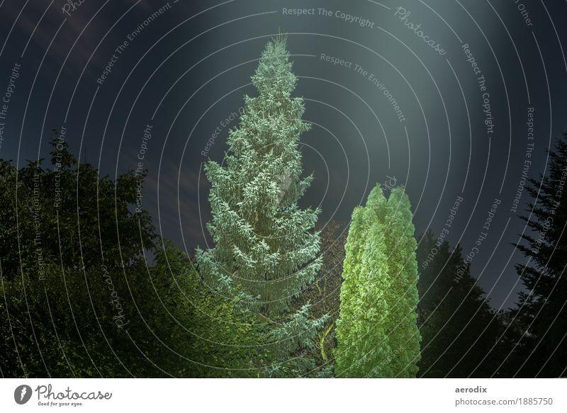 leuchtende Bäume im Vollmondlicht Natur Nachthimmel Baum Wald dunkel grün schwarz Langzeitbelichtung Hintergrundbild mystisch Tanne Beleuchtung Jahreszeiten