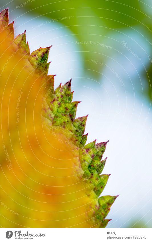 !trash! 2016 l zackiger Jahreswechsel Natur Herbst Blatt Brombeerblätter authentisch trashig Gezackt Zacken Spitze Silhouette Herbstlaub herbstlich Farbfoto