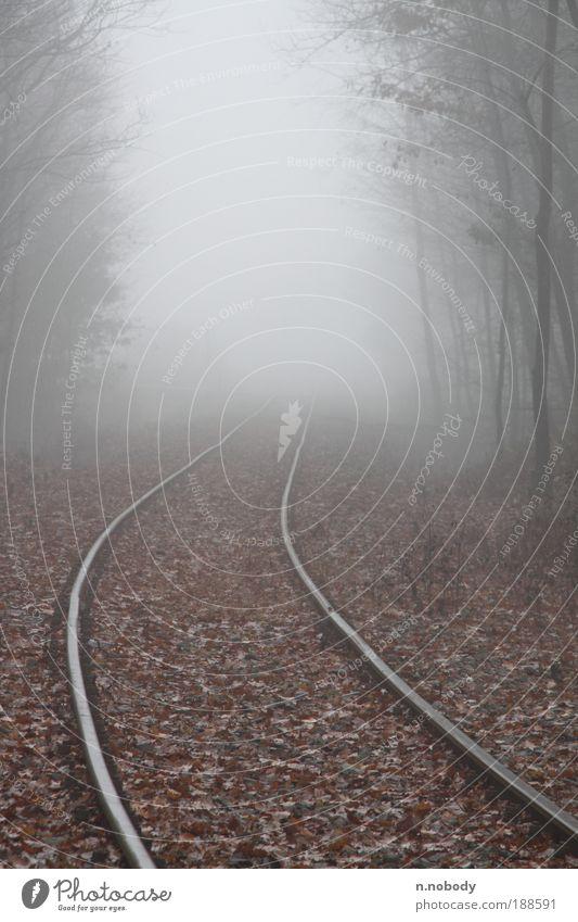 ins nirgendwo ... Landschaft Herbst Winter Nebel Wald Schienenverkehr Bahnfahren Eisenbahn Gleise Farbfoto Gedeckte Farben Außenaufnahme Morgen Silhouette Tag