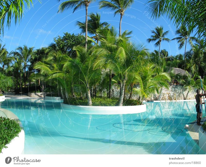 pool Farbe Graffiti Schwimmbad Kuba Palme