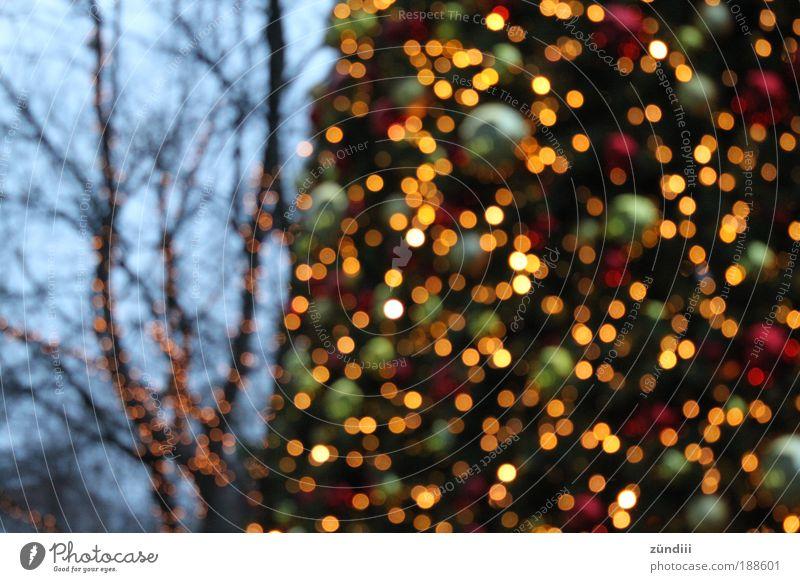 it´s christmas Weihnachtsbaum glänzend schön mehrfarbig gelb gold grün rot Neugier Stimmung Wunsch Weihnachtsstimmung Farbfoto Außenaufnahme Menschenleer