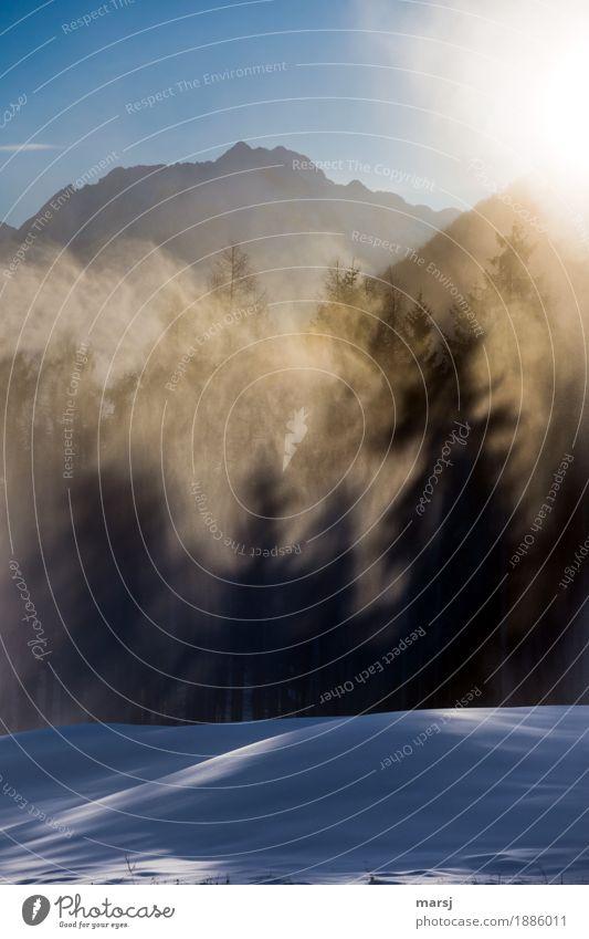 Vorsicht, die Baummonster kommen Natur Winter Schönes Wetter Eis Frost Schneefall Wald Alpen bedrohlich Surrealismus Irritation Baumschatten Schneelandschaft