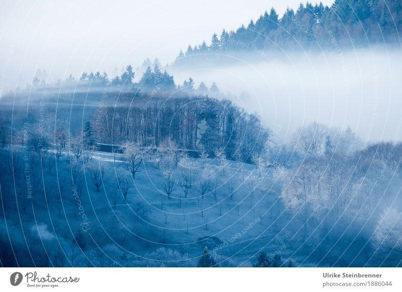 Frostiger Schwarzwald 2 Umwelt Natur Landschaft Pflanze Himmel Sonnenlicht Winter Klima Wetter Nebel Eis Baum Sträucher Nutzpflanze Obstbaum Feld Wald