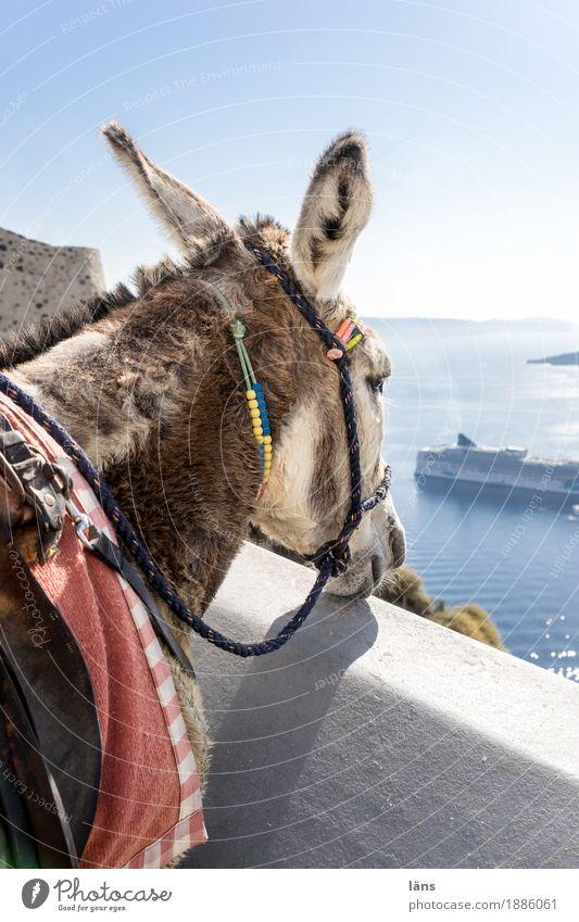 Transportmittel Ferien & Urlaub & Reisen Ausflug Freiheit Sightseeing Sommer Sonne Luft Himmel Wolkenloser Himmel Schönes Wetter Küste Meer Insel Santorin