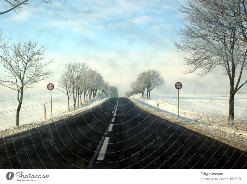 Daisy auf der Heimfahrt nach Entenhausen Winter natürlich Schnee Horizont frisch Kraft Wind Romantik Hoffnung Unwetter kämpfen Schneelandschaft Schneeflocke