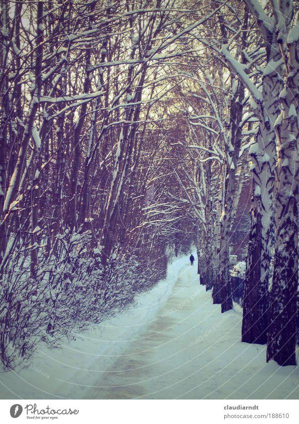 allein Winter Schnee wandern Mensch 1 Natur Landschaft Eis Frost Baum Allee Wege & Pfade gehen laufen kalt Heimweh Fernweh Identität Leben stagnierend